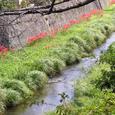 山口市内を流れる川
